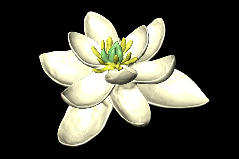 What Earth's First Flower Might Have Looked Like
