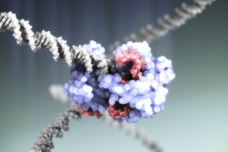 CRISPR corrects mutation in human embryos