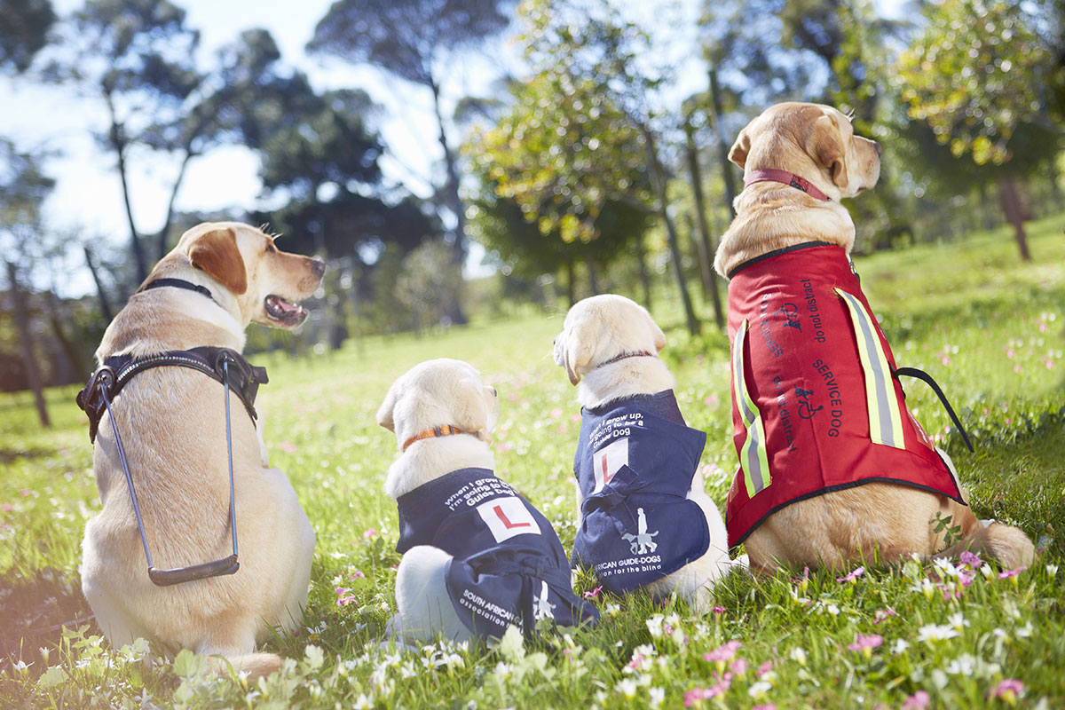 Puppies with Tougher Moms Grow Up into Better Guide Dogs