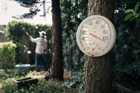 Thermometer in forest