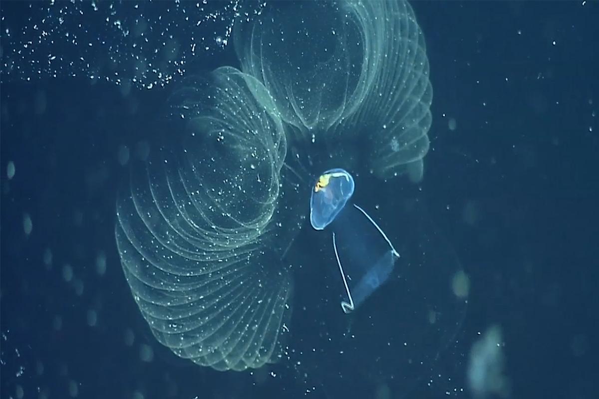 Weird Creatures Are Spreading Polluting Plastic Through