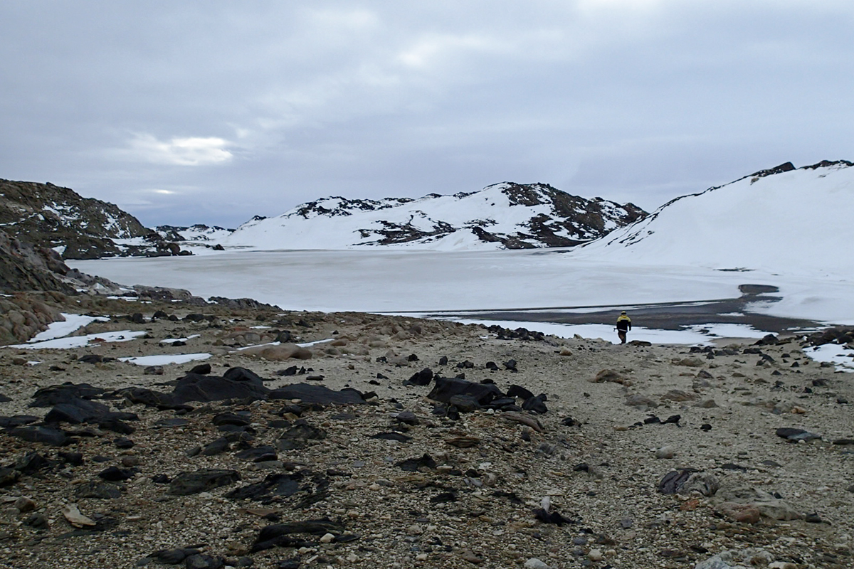 Antarctic mystery microbe could tell us where viruses came from