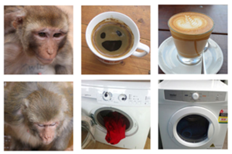 Paired images for the monkeys to look at