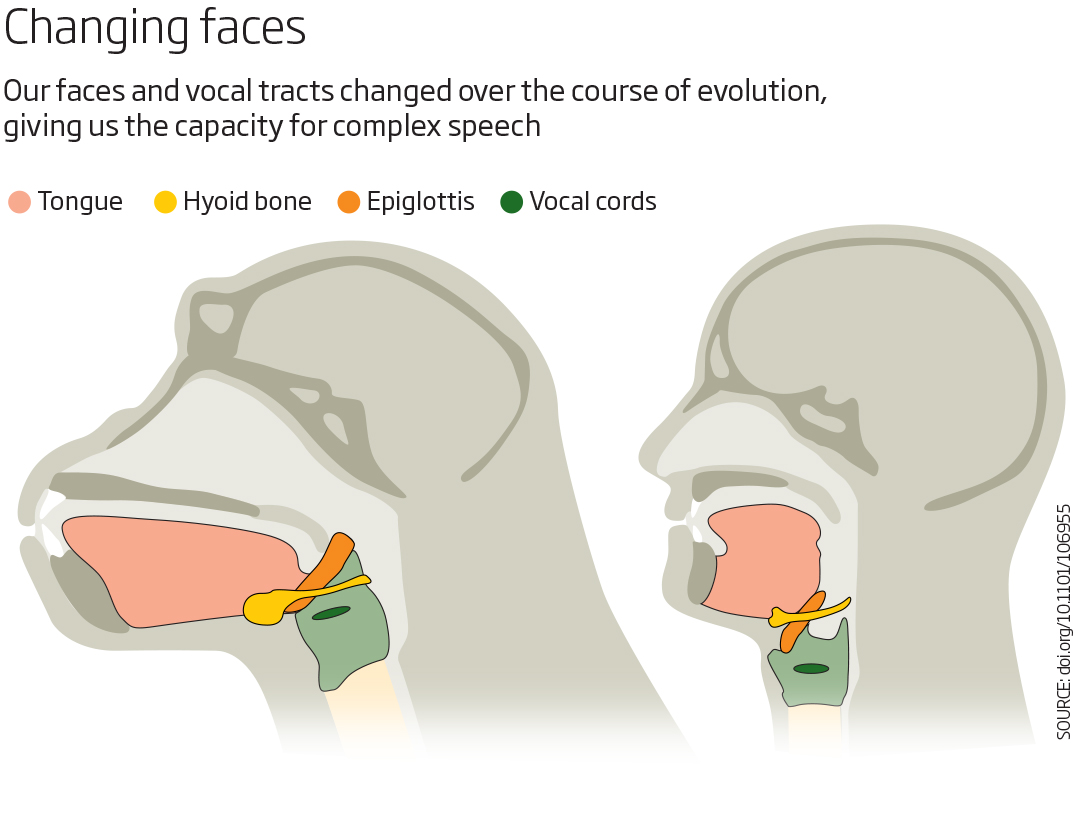 It only takes a few gene tweaks to make a human voice | New Scientist