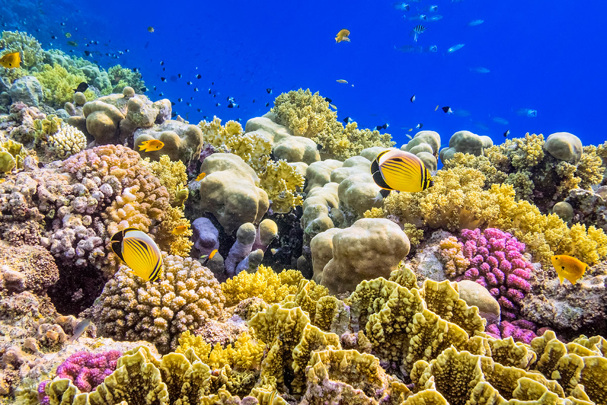 Mother Coral Reefs Are Breathing Life Into Their