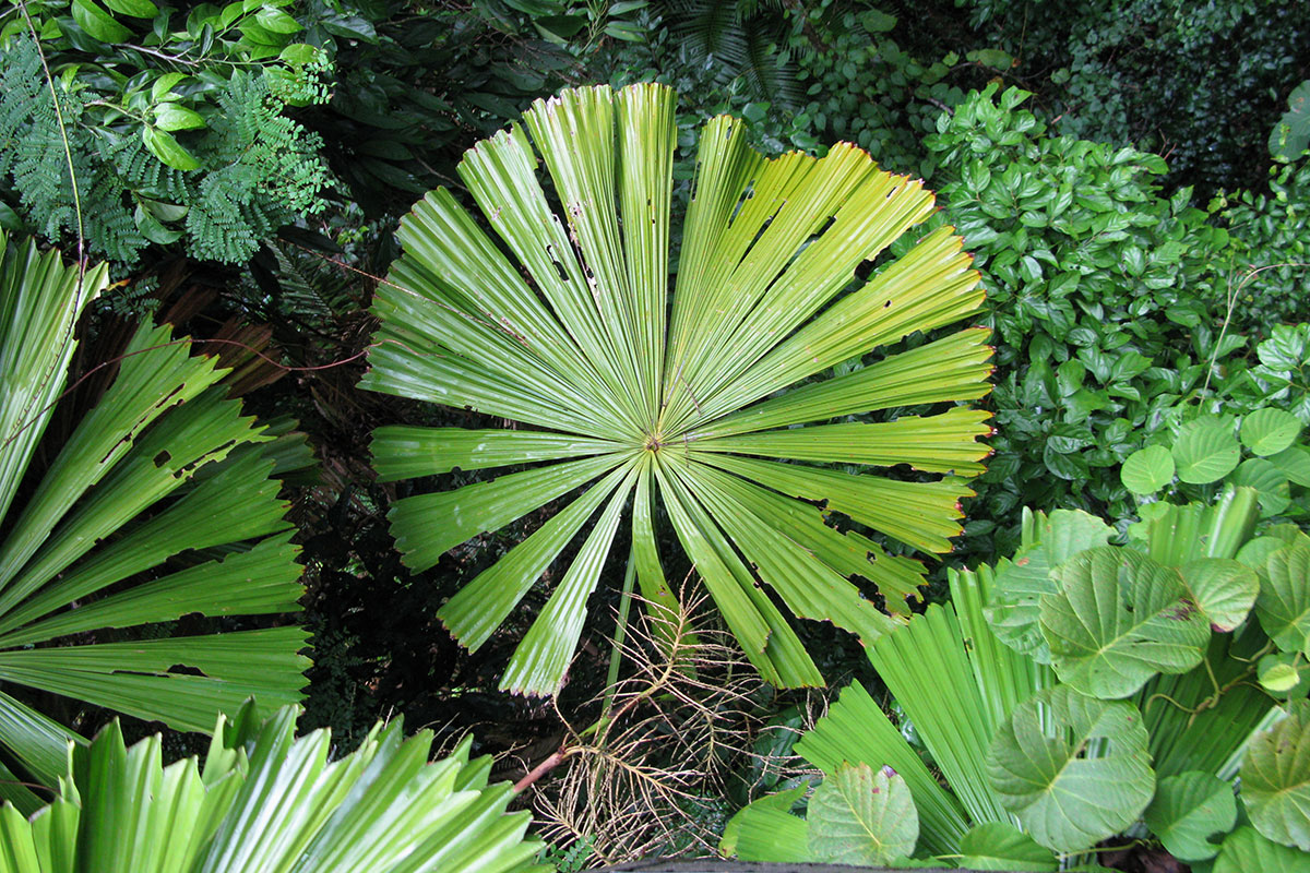 We may finally understand why tropical plants have huge for Jardin plante