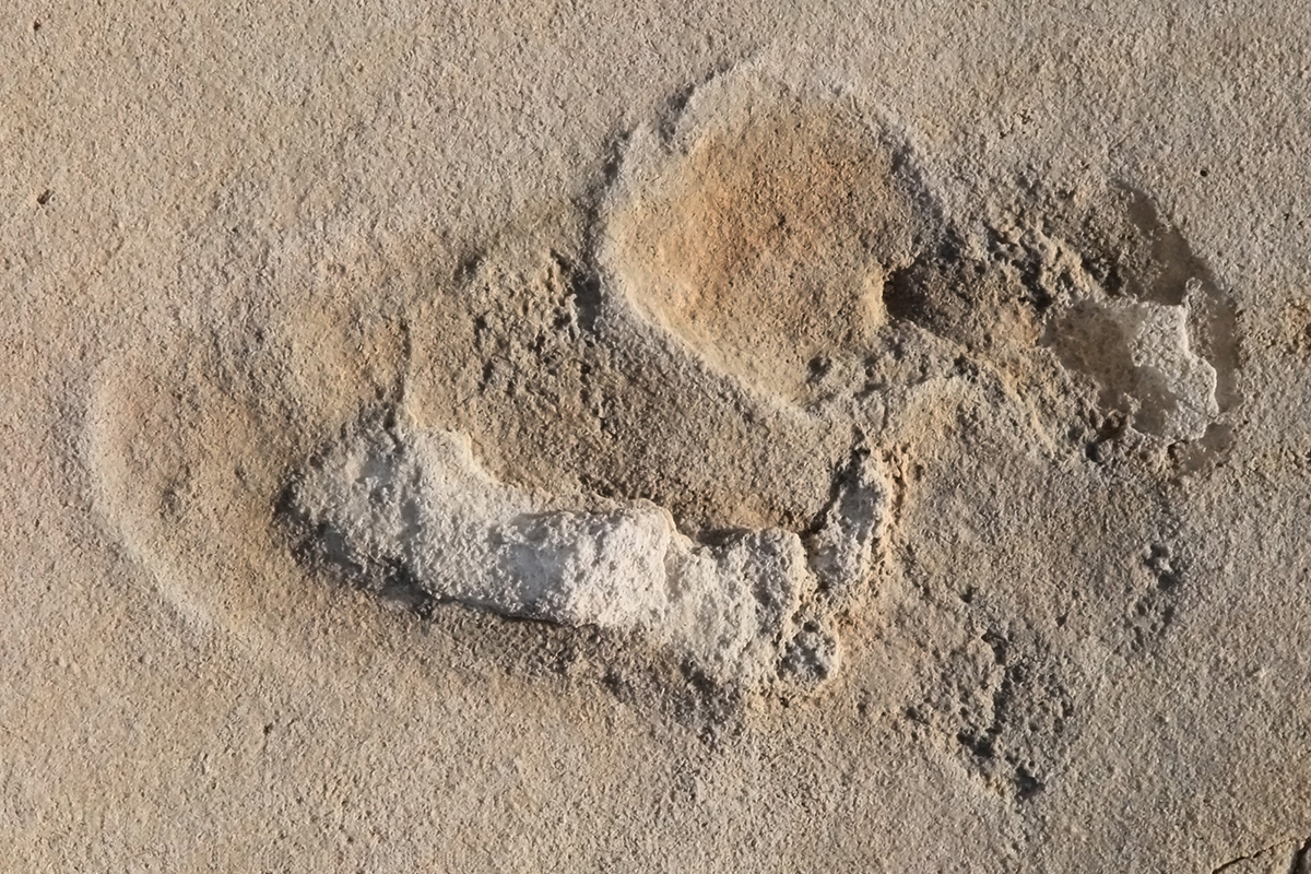 Controversial footprints suggest we evolved in Europe not Africa