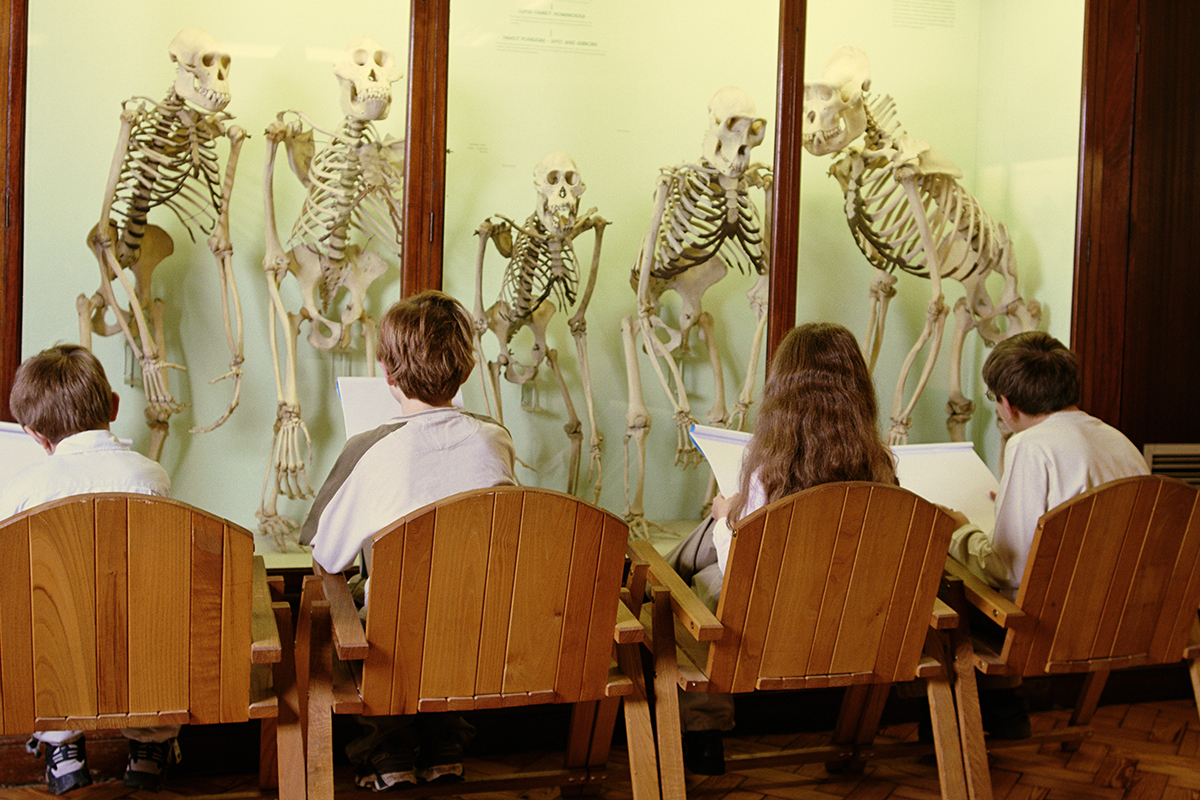 A third of UK adults question evolution. Does that matter?