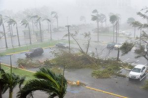 Trees are toppled in a parking lot at Roberto Clemente Coliseum in San Juan, Puerto Rico, on September 20, 2017, during the passage of Hurricane Maria