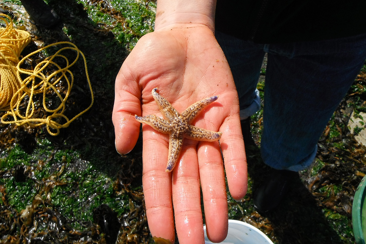 Hundreds of Japanese species floated to the US on tsunami debris