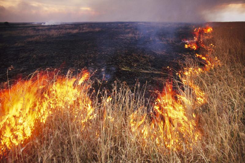 Bushfire near Masai Mara Reserve, Kenya