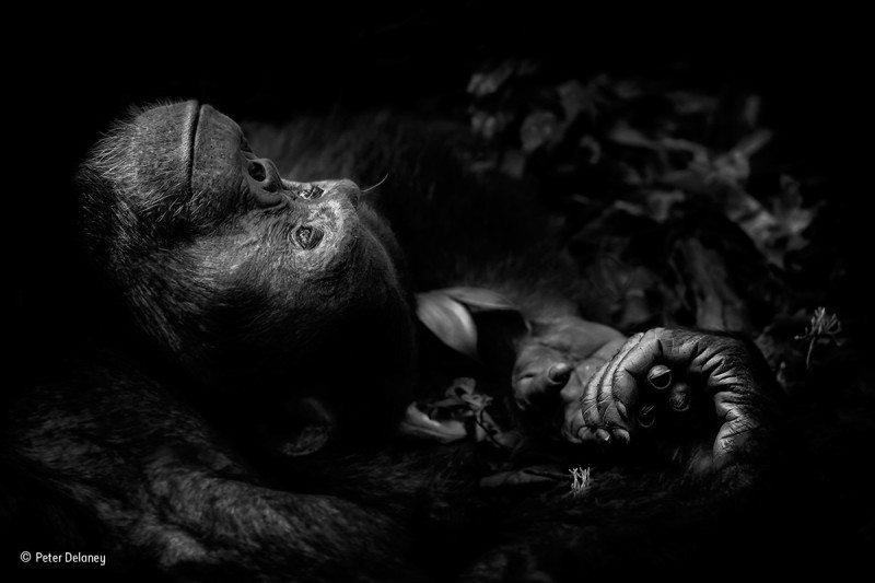 """Contemplation"": Winner 2017, Animal Portraits."