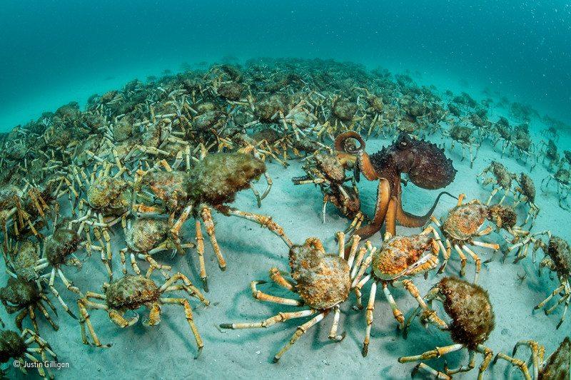 """Crab surprise"": Winner,"