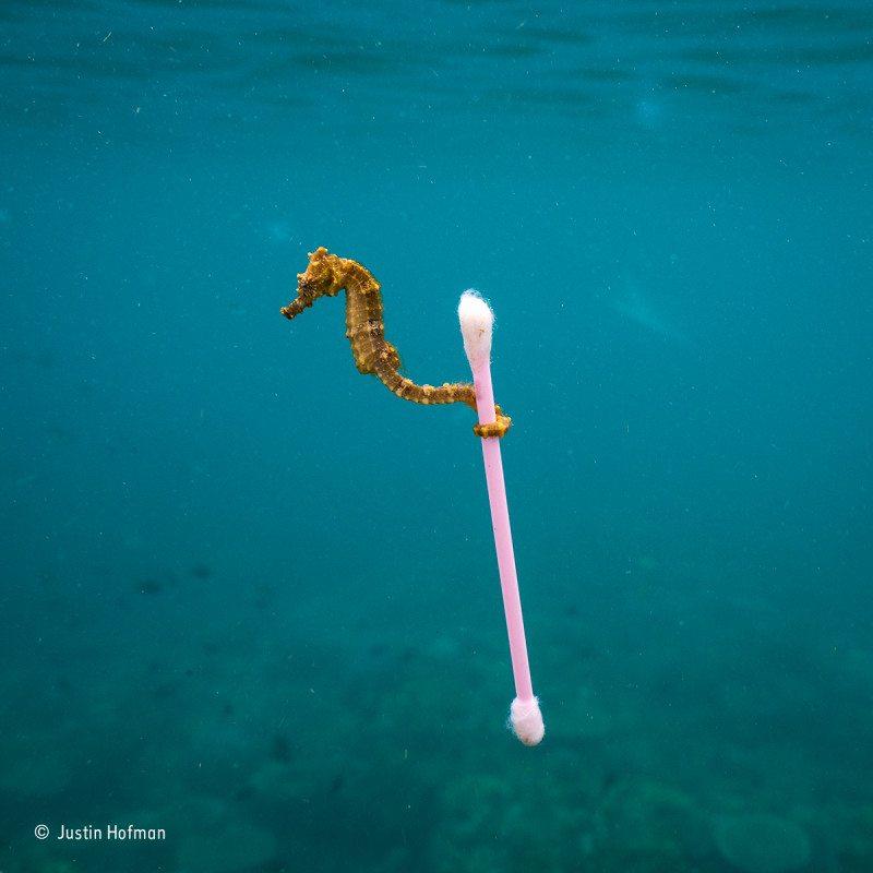 """Sewage surfer"": Finalist 2017, The Wildlife Photojournalist Award: Single Image"