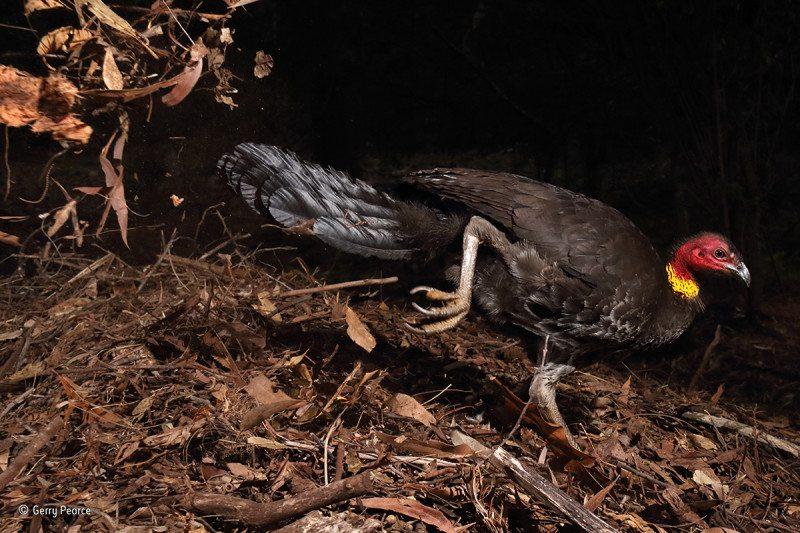 """""""The incubator bird"""": Winner, Bird Behaviour"""