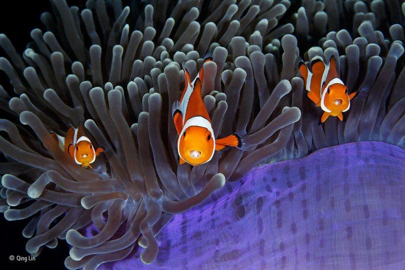 """The insiders"": Finalist, Underwater"