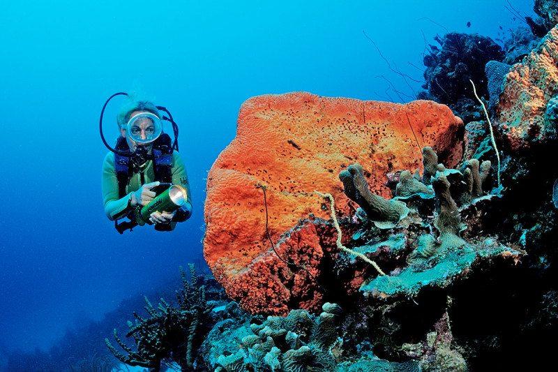 Orange coral on a reef