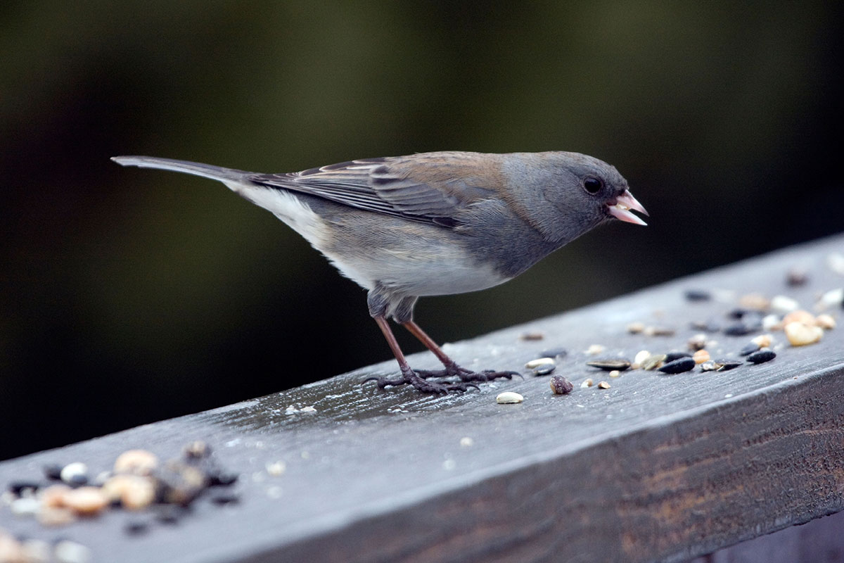 How and Why Birds Sing - Bird Academy | The Cornell Lab