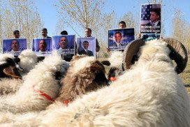 There are sheep who can recognise Barack Obama