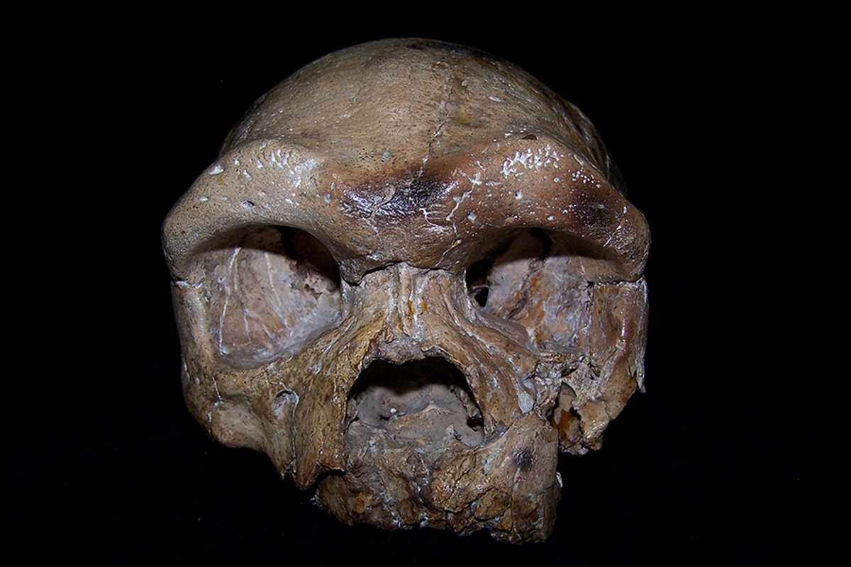 Ancient skull from China may rewrite the origins of our species