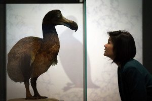 woman looks at a dodo