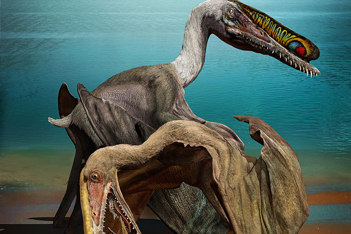New Fossil Discovery in China Answers Unanswered Questions on Flying Reptiles
