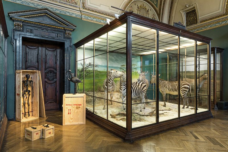 zebra exhibits