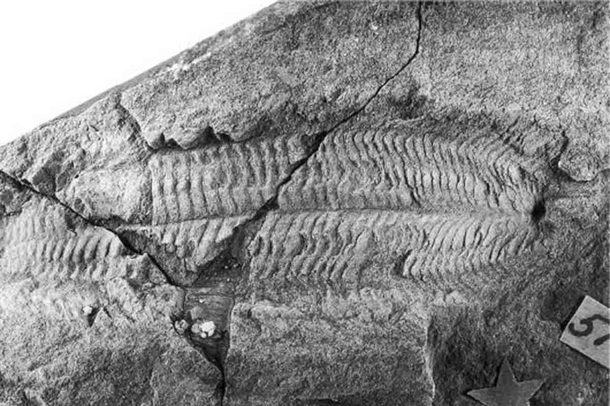 morris_et_al-2005-palaeontology.jpg
