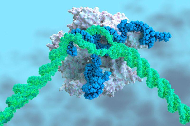 CRISPR-Cas9 gene-editing complex
