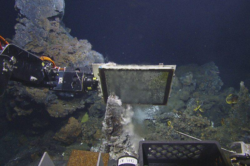 Skate creates 'nurseries' around hot, deep-sea vents