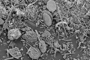 microorganisms found in oceans