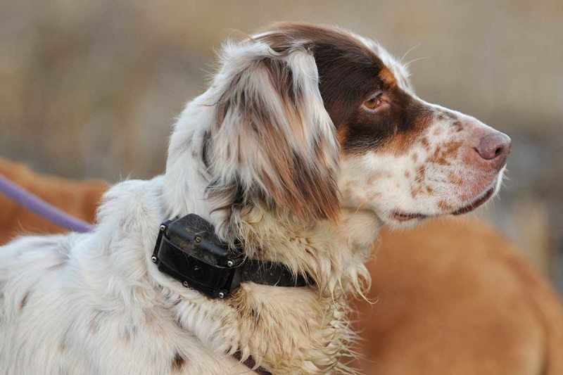 shock collars and dogs Searching to buy the most popular dog bark collars for your canine read our essential review and list of the top rated products this year.