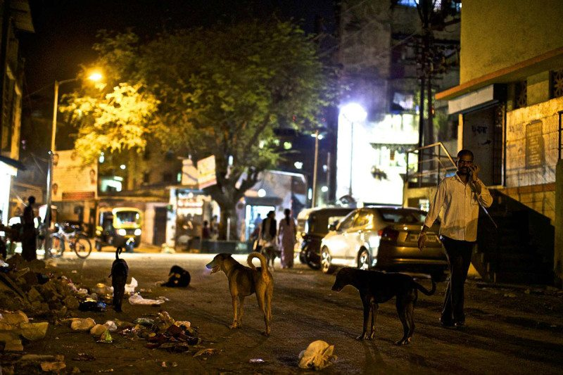 Feral dogs roam the streets of Mumbai