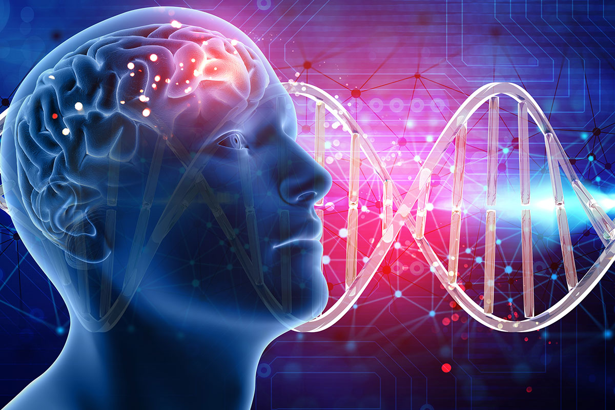 Researchers identify 538 'intelligent' genes