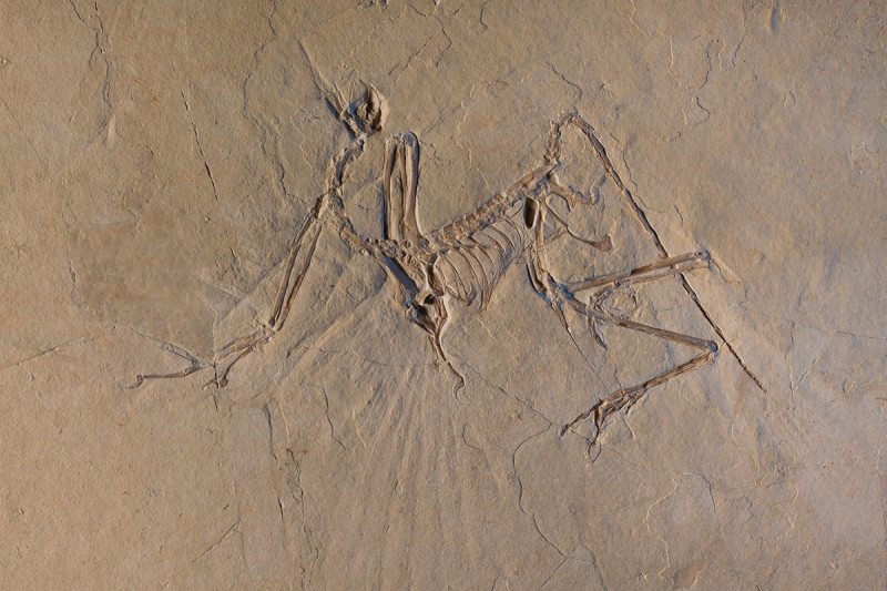 Archaeopteryx could fly, but not very well