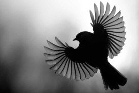 Heavy metals may change birds' brains