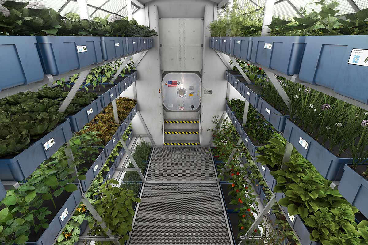 Astronaut pee could keep plants alive in space for decades