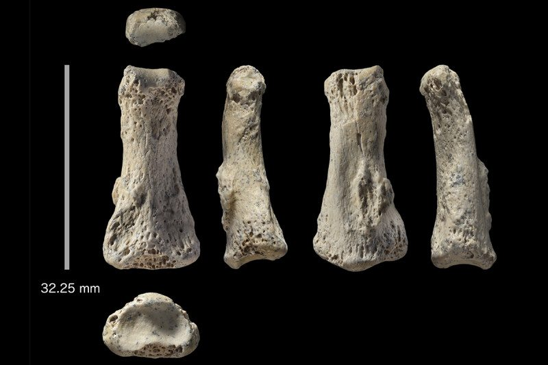 The finger bone found at Al Wusta