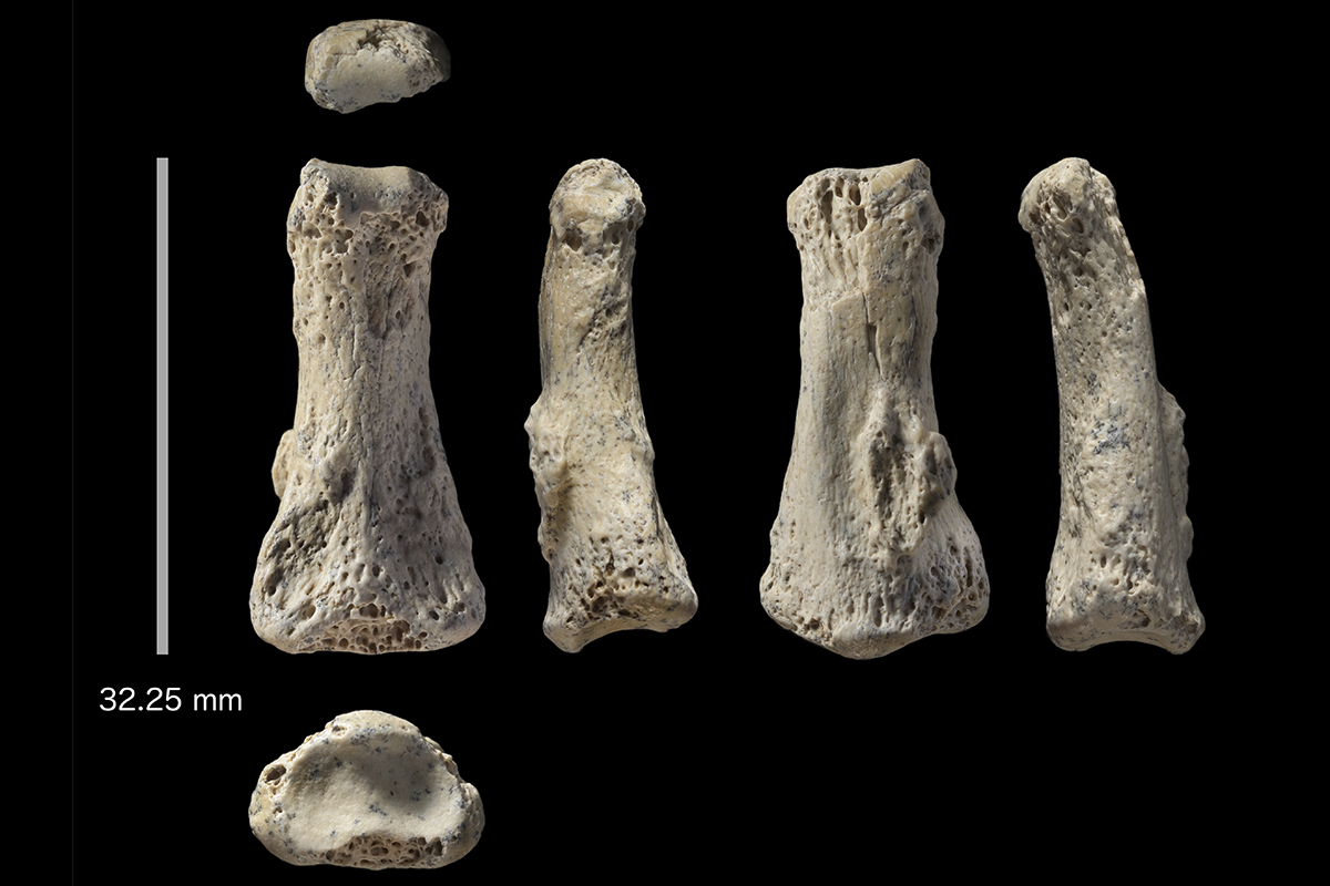 Ancient finger bone may reveal humanity's path out of Africa