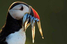 Birds face a torrent of threats