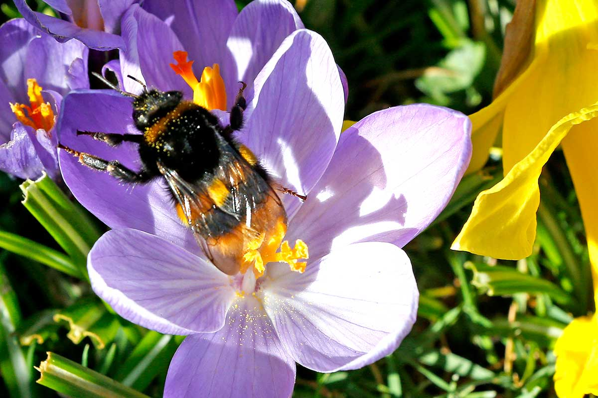 Pollinating insects like bees are harmed by neonicotinoids