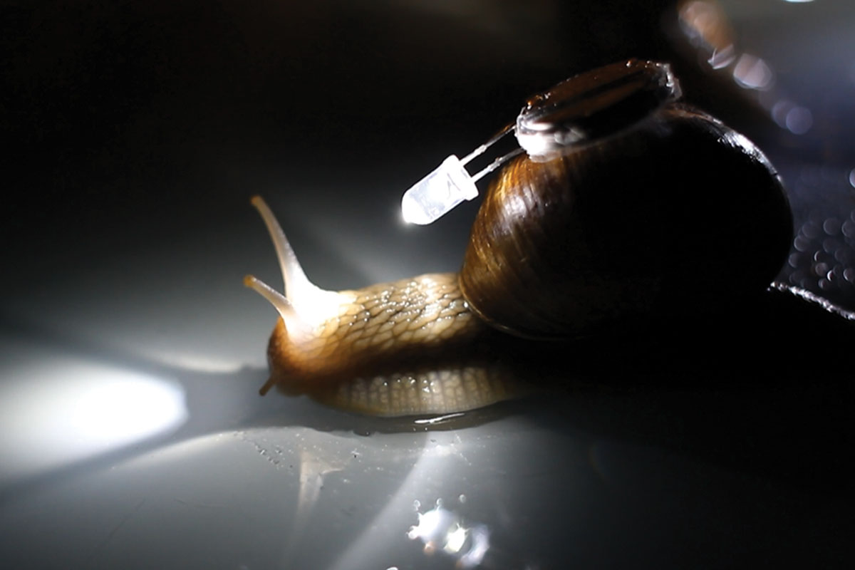 Snails in performance