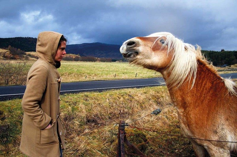 Person staring at a horse
