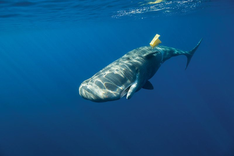 Whale swimming past plastic