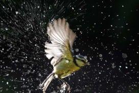 Bird baths can be healing