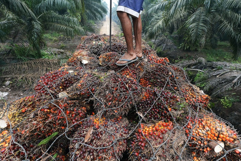 Much of the world's palm oil comes from the island of Sumatra