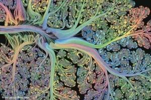 cerebellar-folia