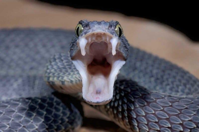 Bacteria can even live in snake venom