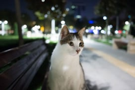 A cat by the roadside