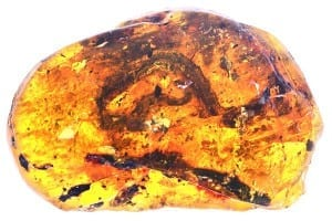 The baby snake in amber was first mis-identified as a centipede